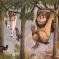 Maurice Sendak | Maurice Sendak Kimdir? (Biyografisi)